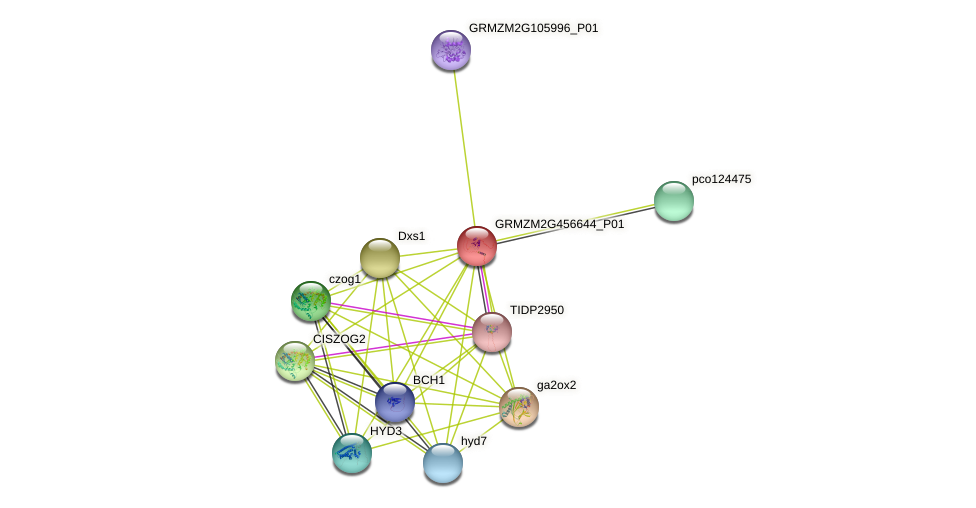 GRMZM2G456644_P01 protein (Zea mays) - STRING interaction network