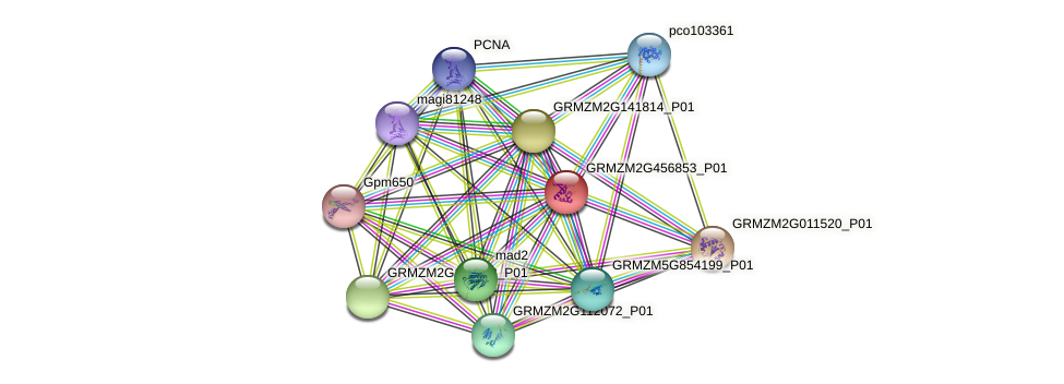 GRMZM2G456853_P01 protein (Zea mays) - STRING interaction network