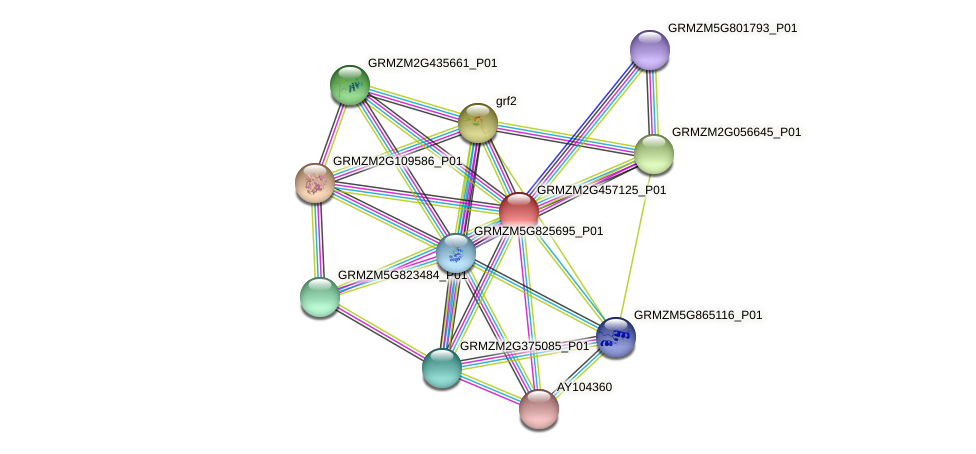 GRMZM2G457125_P01 protein (Zea mays) - STRING interaction network