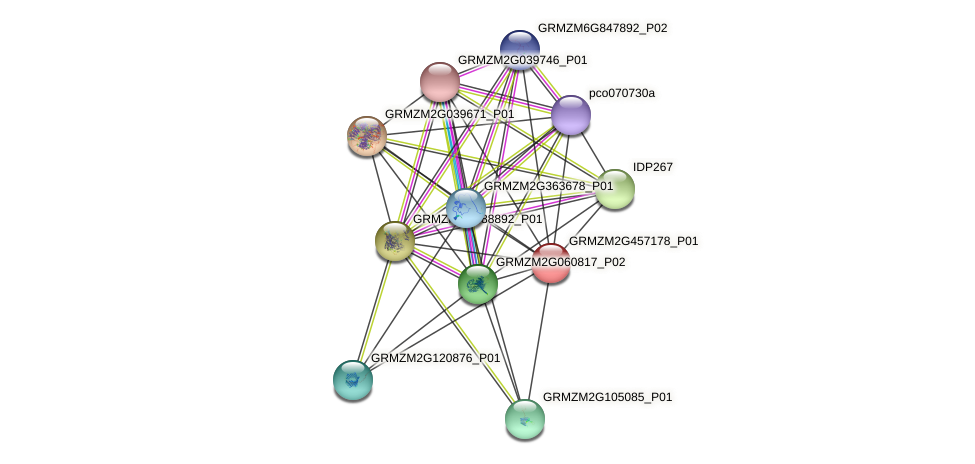 GRMZM2G457178_P01 protein (Zea mays) - STRING interaction network