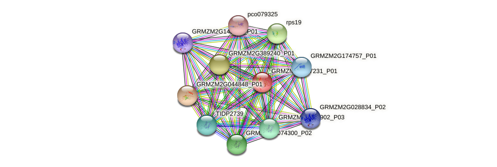 GRMZM2G457231_P01 protein (Zea mays) - STRING interaction network
