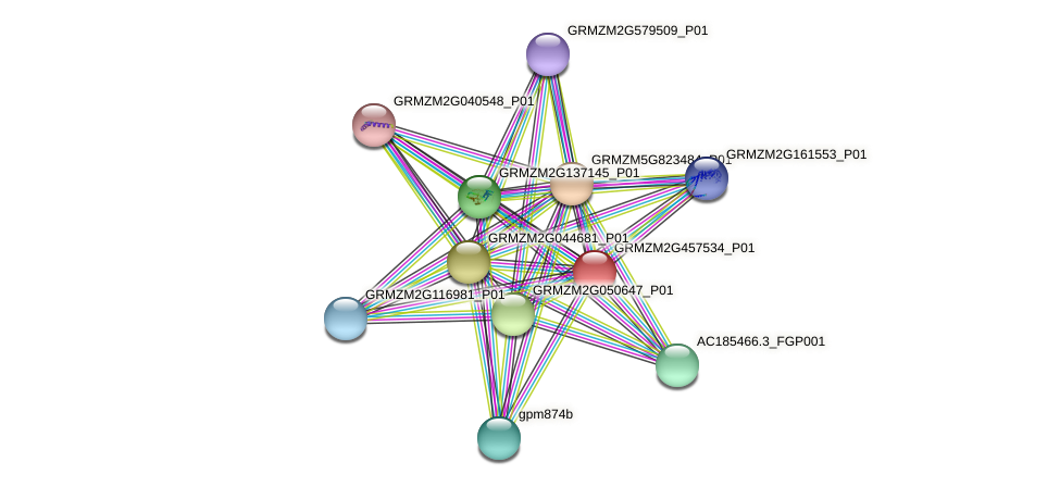 GRMZM2G457534_P01 protein (Zea mays) - STRING interaction network