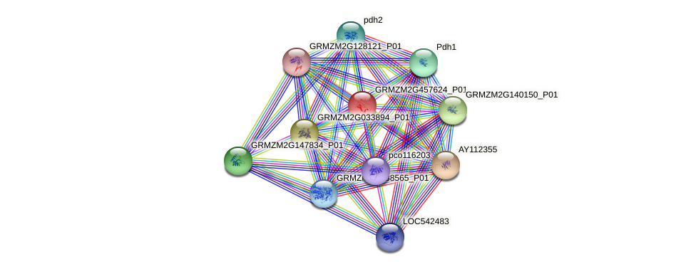 GRMZM2G457624_P01 protein (Zea mays) - STRING interaction network