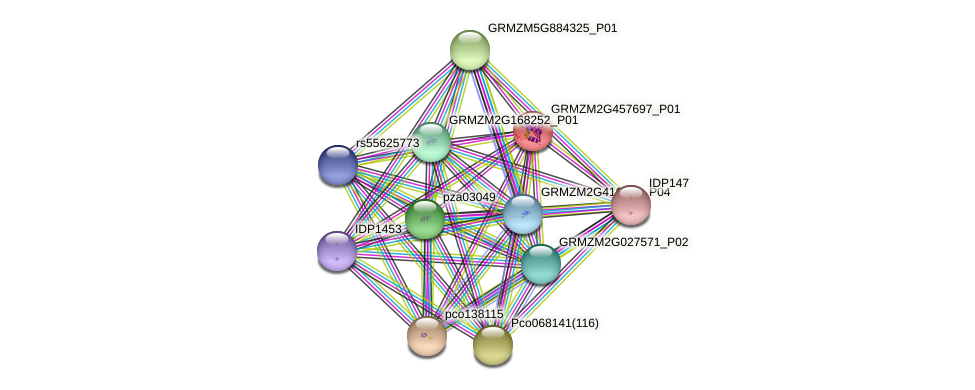 GRMZM2G457697_P01 protein (Zea mays) - STRING interaction network
