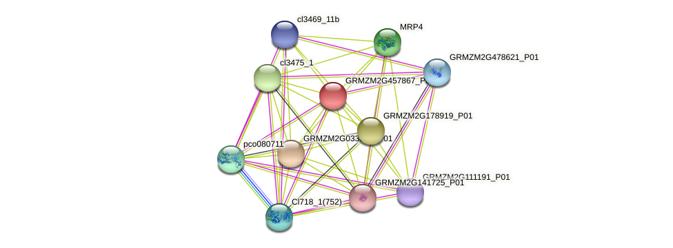GRMZM2G457867_P01 protein (Zea mays) - STRING interaction network