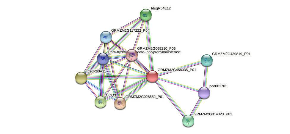 GRMZM2G458035_P01 protein (Zea mays) - STRING interaction network
