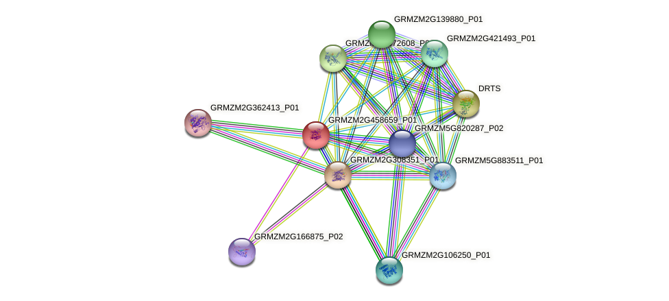 GRMZM2G458659_P01 protein (Zea mays) - STRING interaction network