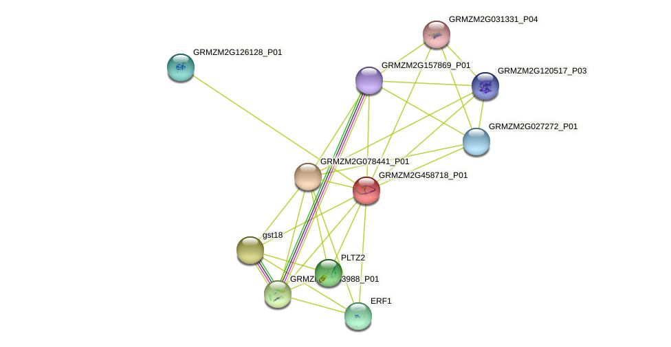 GRMZM2G458718_P01 protein (Zea mays) - STRING interaction network