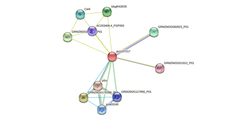 P4H9 protein (Zea mays) - STRING interaction network