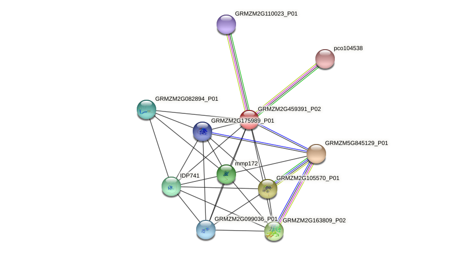 GRMZM2G459391_P02 protein (Zea mays) - STRING interaction network