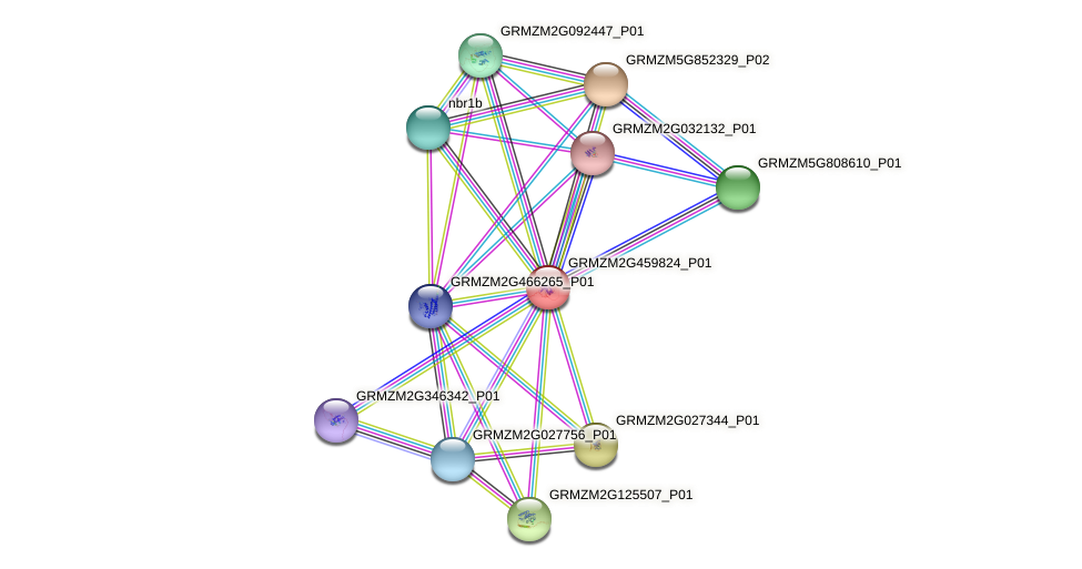 GRMZM2G459824_P01 protein (Zea mays) - STRING interaction network