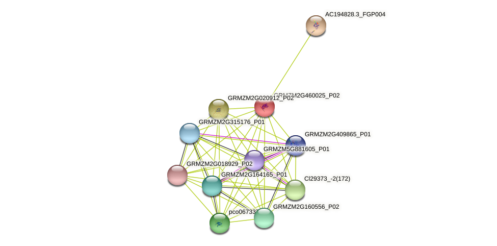 100217055 protein (Zea mays) - STRING interaction network