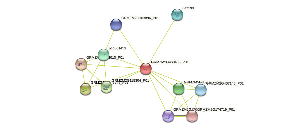 GRMZM2G460465_P01 protein (Zea mays) - STRING interaction network