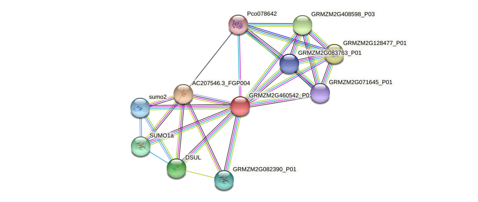 GRMZM2G460542_P01 protein (Zea mays) - STRING interaction network