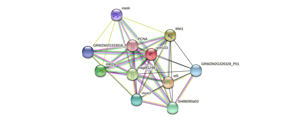 GRMZM2G461447_P01 protein (Zea mays) - STRING interaction network