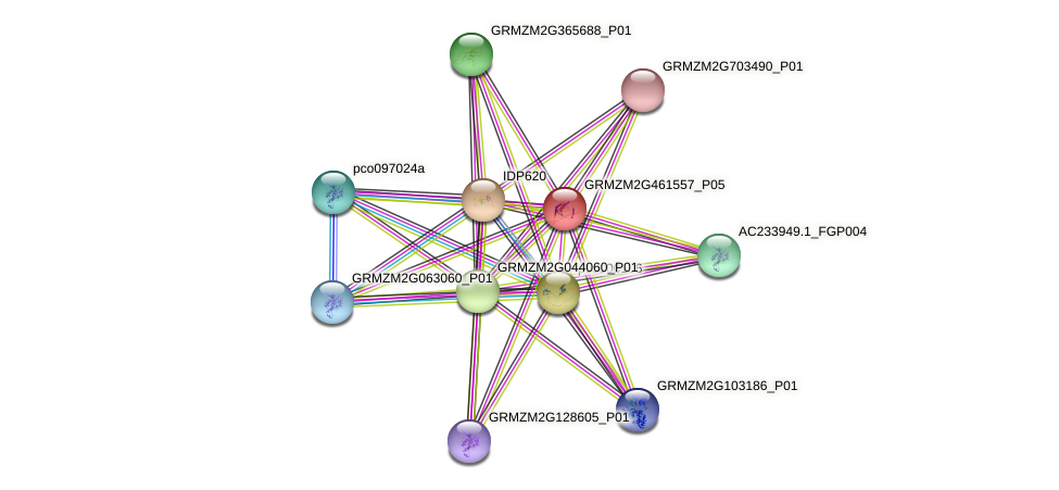GRMZM2G461557_P05 protein (Zea mays) - STRING interaction network