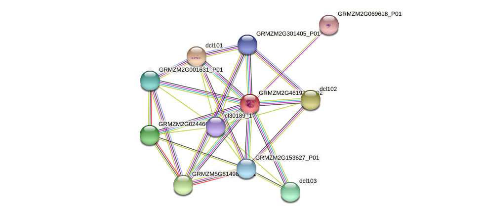 GRMZM2G461936_P02 protein (Zea mays) - STRING interaction network