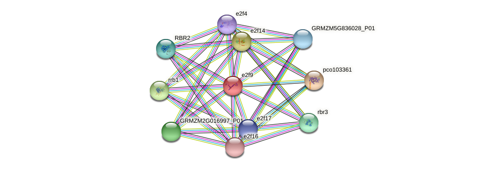 e2f9 protein (Zea mays) - STRING interaction network