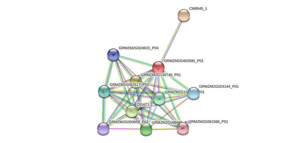 GRMZM2G462690_P01 protein (Zea mays) - STRING interaction network