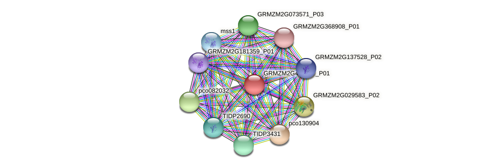 GRMZM2G463267_P01 protein (Zea mays) - STRING interaction network