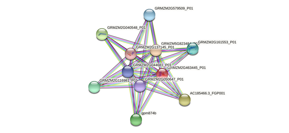 GRMZM2G463445_P01 protein (Zea mays) - STRING interaction network