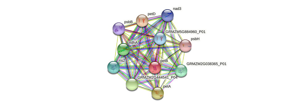 petB protein (Zea mays) - STRING interaction network