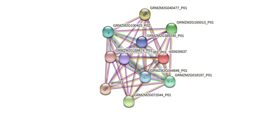 GRMZM2G464401_P01 protein (Zea mays) - STRING interaction network
