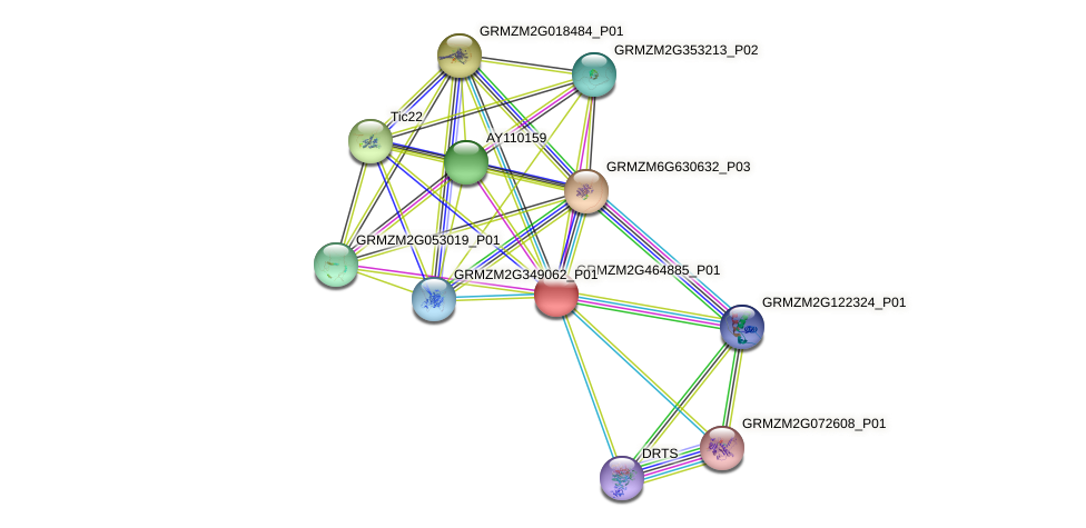 GRMZM2G464885_P01 protein (Zea mays) - STRING interaction network