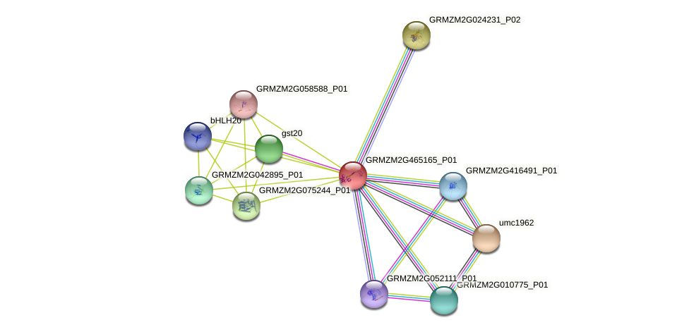 GRMZM2G465165_P01 protein (Zea mays) - STRING interaction network