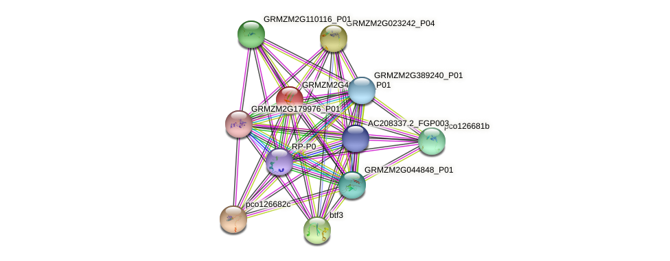 GRMZM2G465333_P01 protein (Zea mays) - STRING interaction network