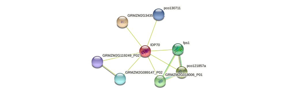 IDP70 protein (Zea mays) - STRING interaction network