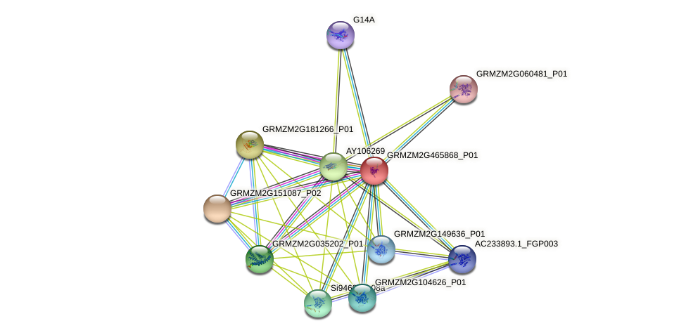 GRMZM2G465868_P01 protein (Zea mays) - STRING interaction network