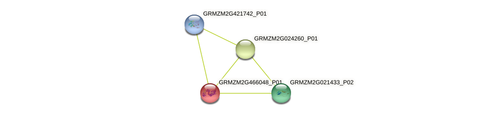GRMZM2G466048_P01 protein (Zea mays) - STRING interaction network