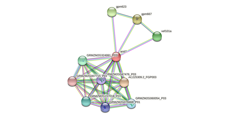 arid7 protein (Zea mays) - STRING interaction network