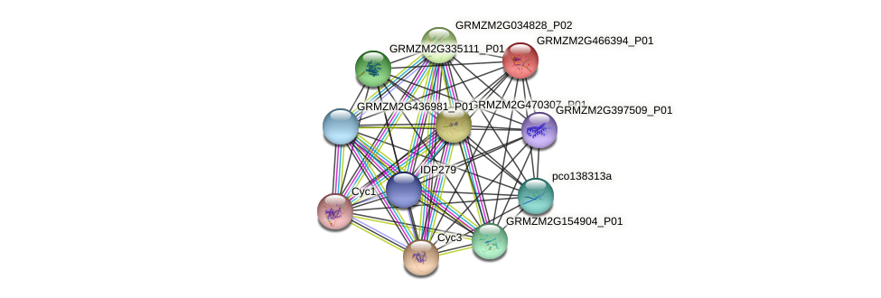 Zm.6380 protein (Zea mays) - STRING interaction network