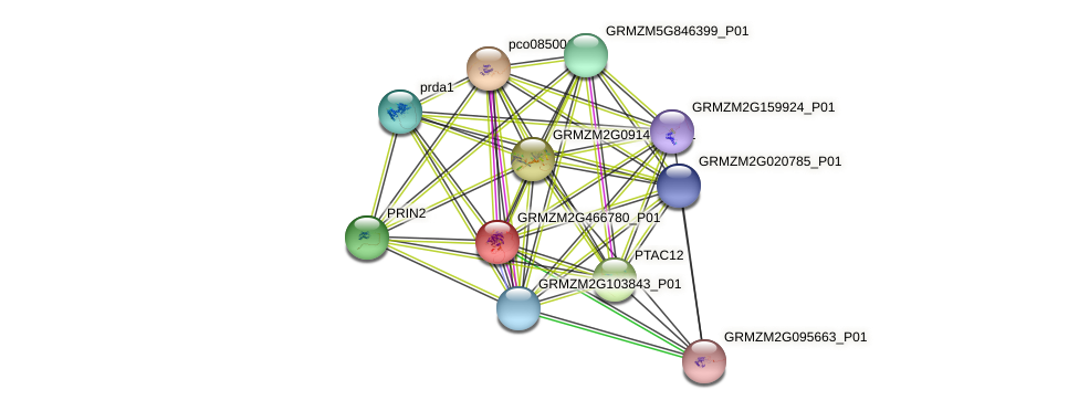 GRMZM2G466780_P01 protein (Zea mays) - STRING interaction network
