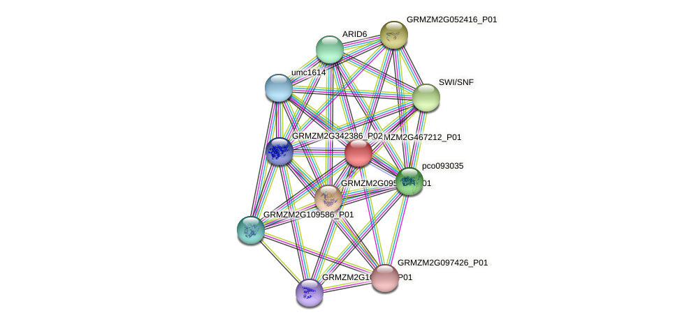 GRMZM2G467212_P01 protein (Zea mays) - STRING interaction network