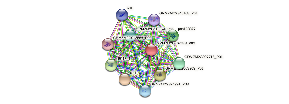 GRMZM2G467338_P02 protein (Zea mays) - STRING interaction network