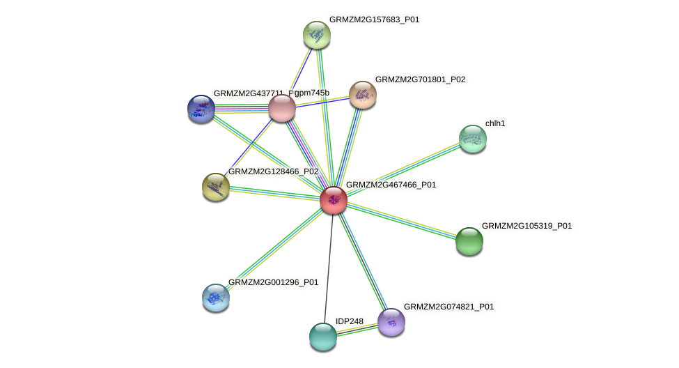 GRMZM2G467466_P01 protein (Zea mays) - STRING interaction network