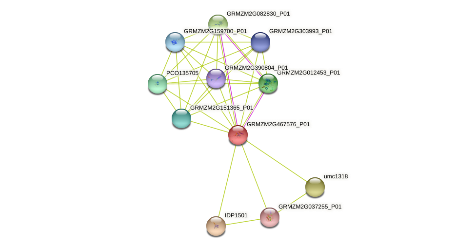 103640726 protein (Zea mays) - STRING interaction network
