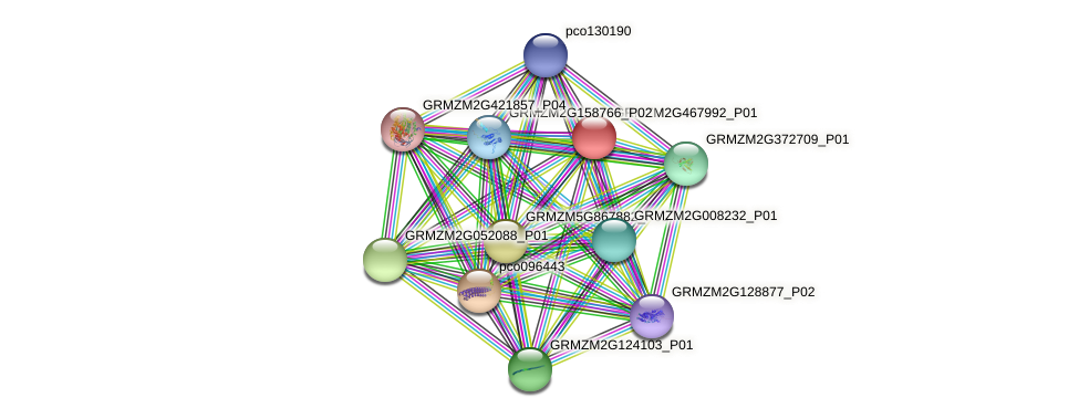 GRMZM2G467992_P01 protein (Zea mays) - STRING interaction network