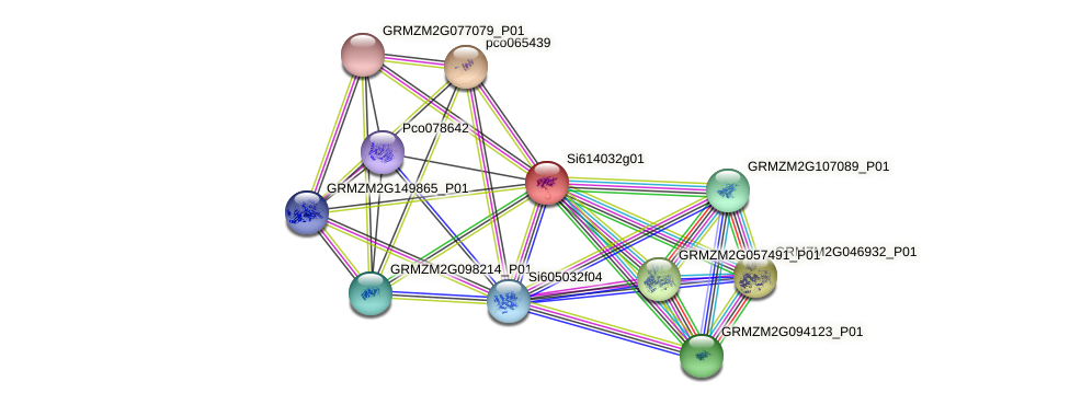 GRMZM2G468693_P02 protein (Zea mays) - STRING interaction network