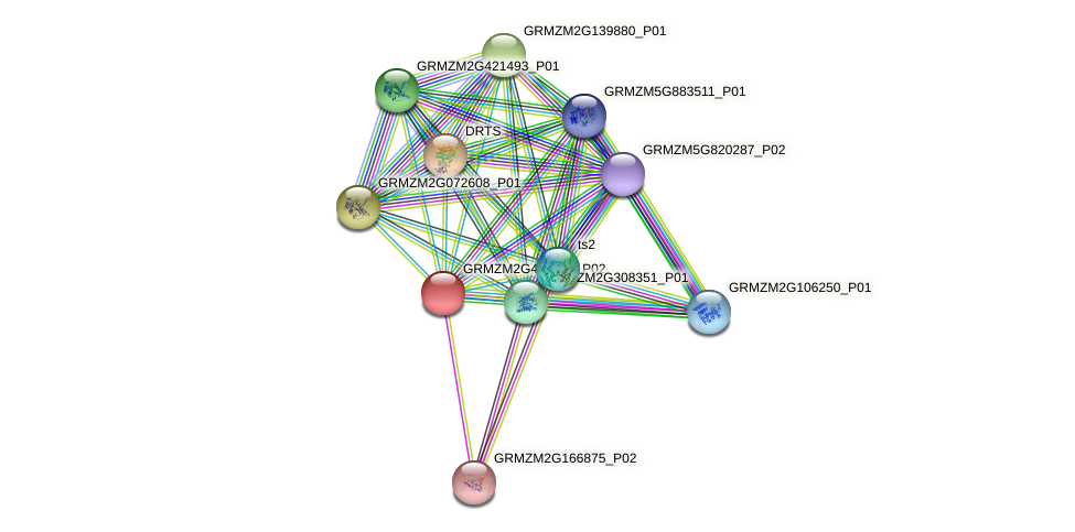 GRMZM2G468855_P02 protein (Zea mays) - STRING interaction network