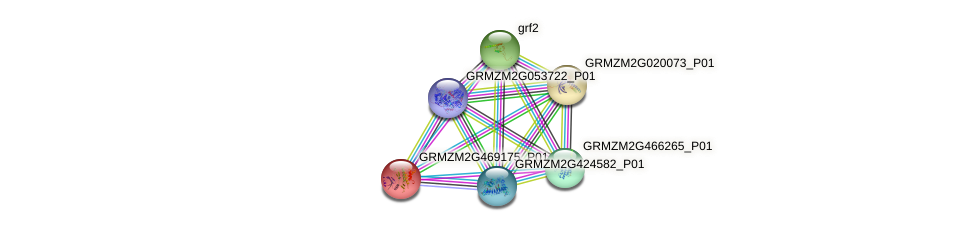GRMZM2G469175_P01 protein (Zea mays) - STRING interaction network