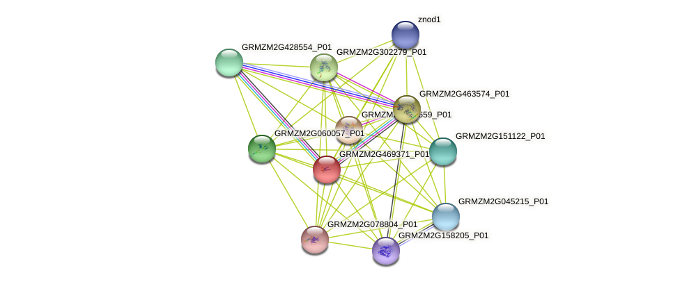 GRMZM2G469371_P01 protein (Zea mays) - STRING interaction network
