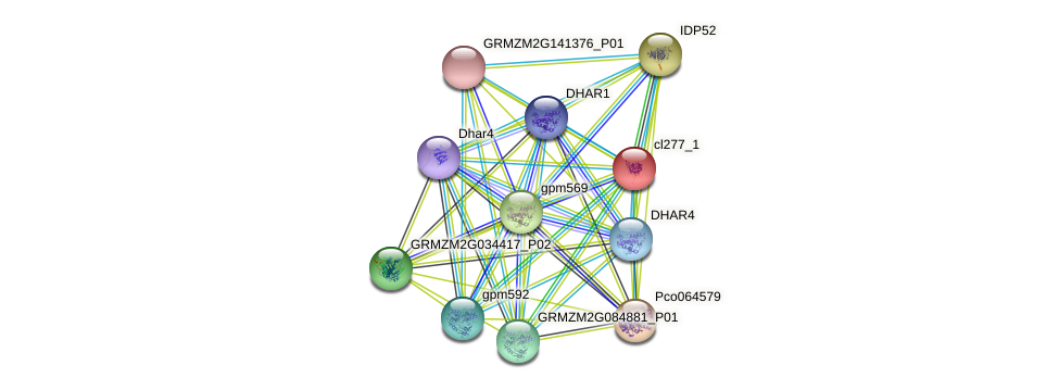 cl277_1 protein (Zea mays) - STRING interaction network