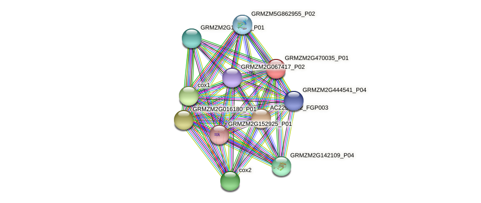 GRMZM2G470035_P01 protein (Zea mays) - STRING interaction network