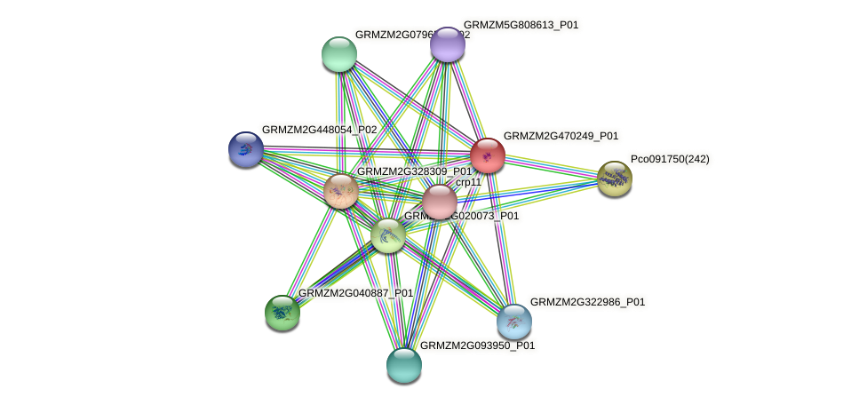 GRMZM2G470249_P01 protein (Zea mays) - STRING interaction network