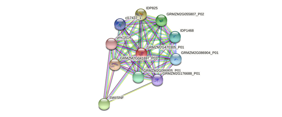 GRMZM2G470305_P01 protein (Zea mays) - STRING interaction network