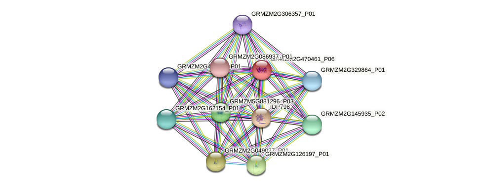 GRMZM2G470461_P06 protein (Zea mays) - STRING interaction network